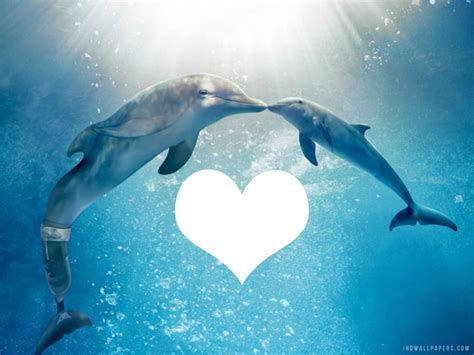 Photo montage winter and hope dolphin heart frame - Pixiz