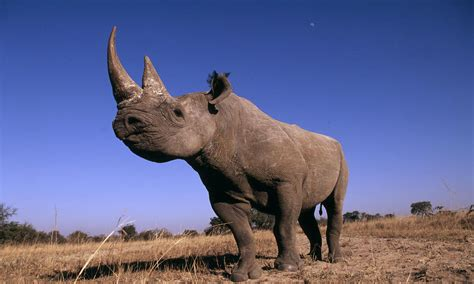 black_rhino_53964_hero | Photos | WWF