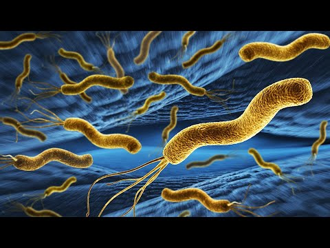 PPT - Helicobacter pylori PowerPoint Presentation, free