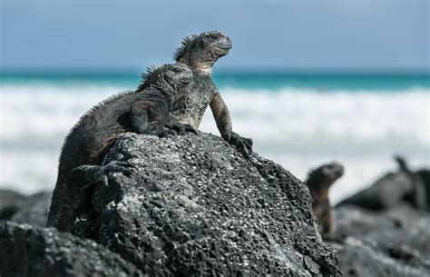 The Best of Culture in Galapagos Islands, Ecuador