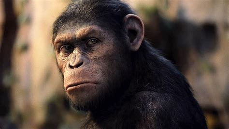 'Dawn of the Planet of the Apes': Other Monkey and Ape
