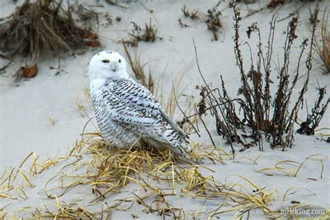 These were taken along the New Jersey shore during several